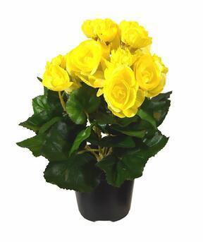 Pianta artificiale Begonia gialla 25 cm