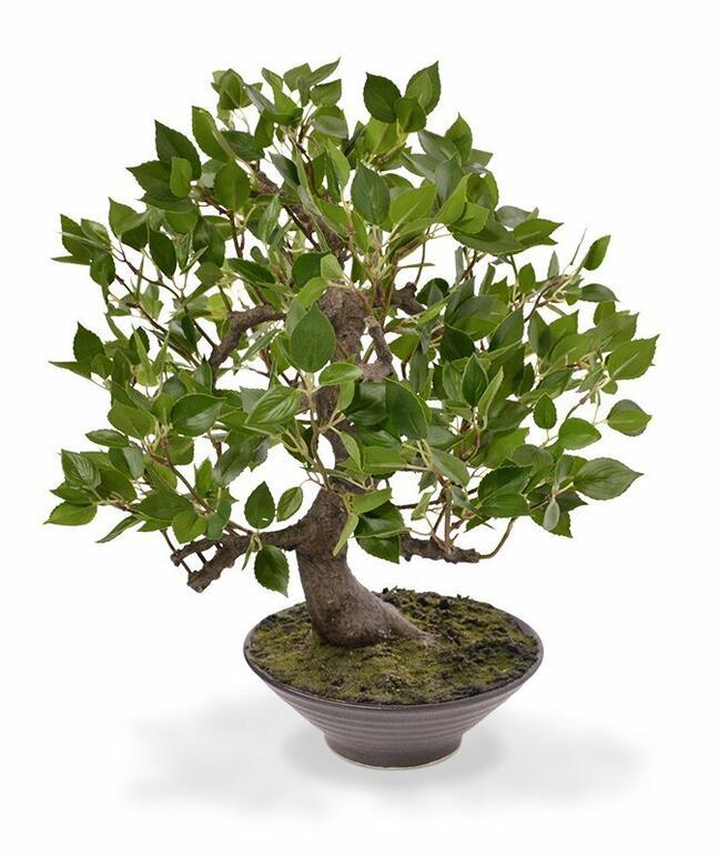 Bonsai artificiale Fikus Wiandi 45 cm