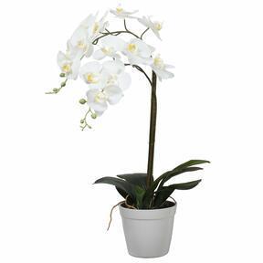 Orchidea artificiale bianca 65 cm