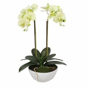 Orchidea burro artificiale 50 cm