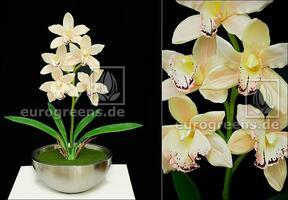 Pianta artificiale Orchidea Cymbidium crema 50 cm
