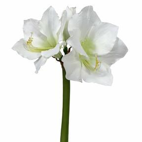 Ramo artificiale Amaryllis bianco 55 cm