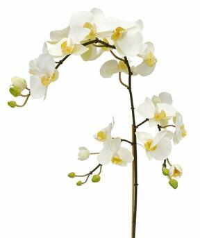 Ramo artificiale di Orchidea bianco 110 cm