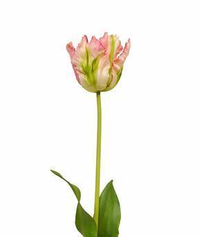 Ramo artificiale Tulipano verde-rosa 70 cm